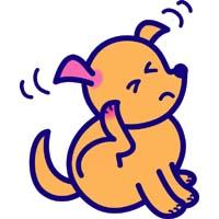 犬の熱中症対策お留守番中にしておく対策はコレ!初期症状から応急処置法までをご紹介!