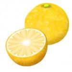 果実酒を手作りでオレンジ酒♪グレープフルーツ酒の作り方、ジャムまで作れます!