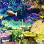 美ら海水族館のチケットを安く買う方法!写真を撮るおすすめスポットは?ジンベエザメの餌やりは必見!