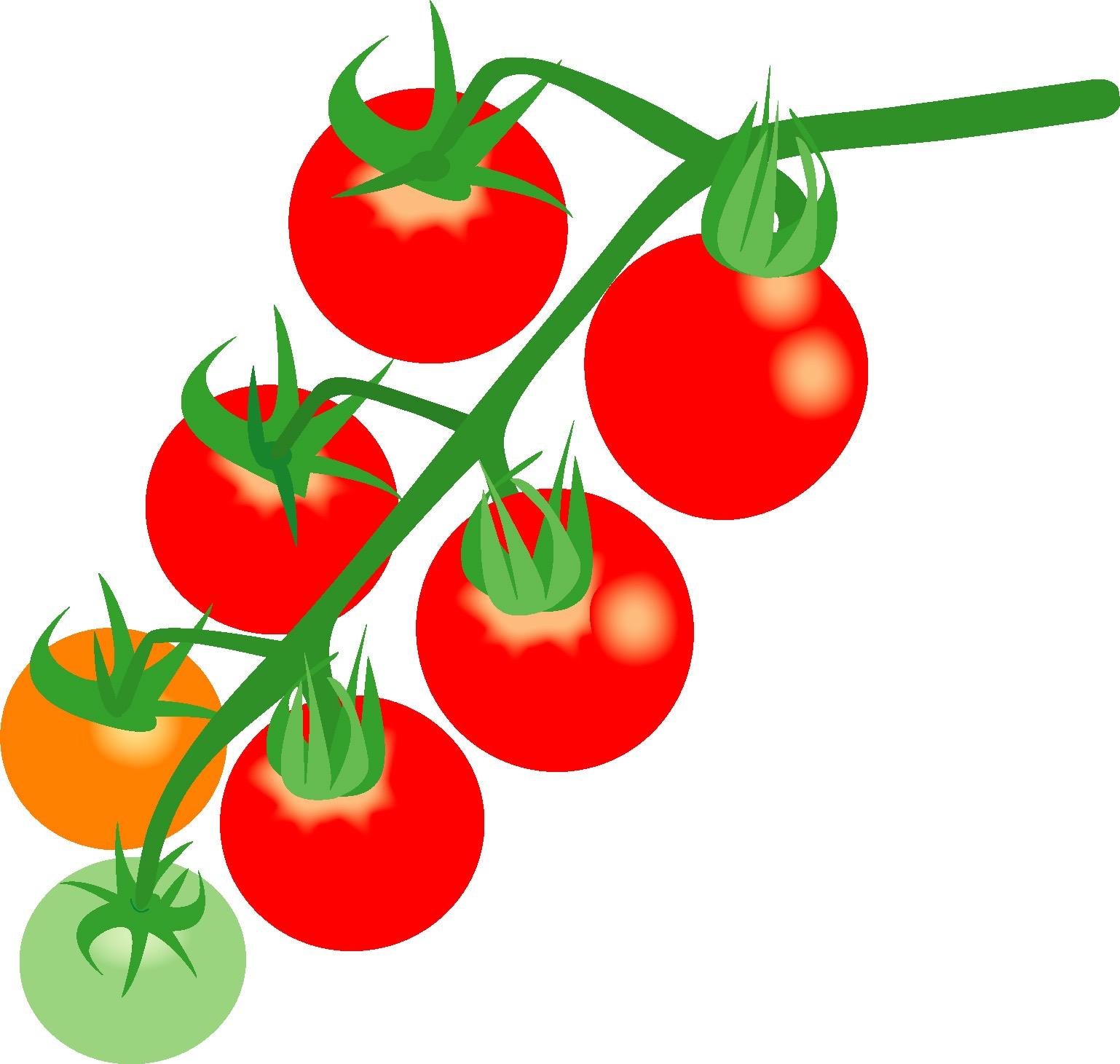 家庭菜園でプチトマトの台風対策は?ベランダでやった方がいい台風対策?苗が折れたらどうする?